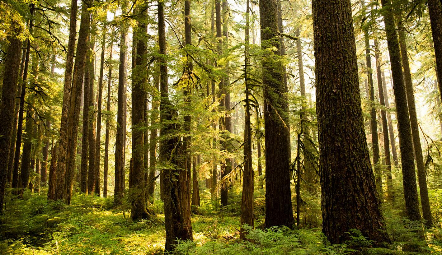 Santiam State Forest.