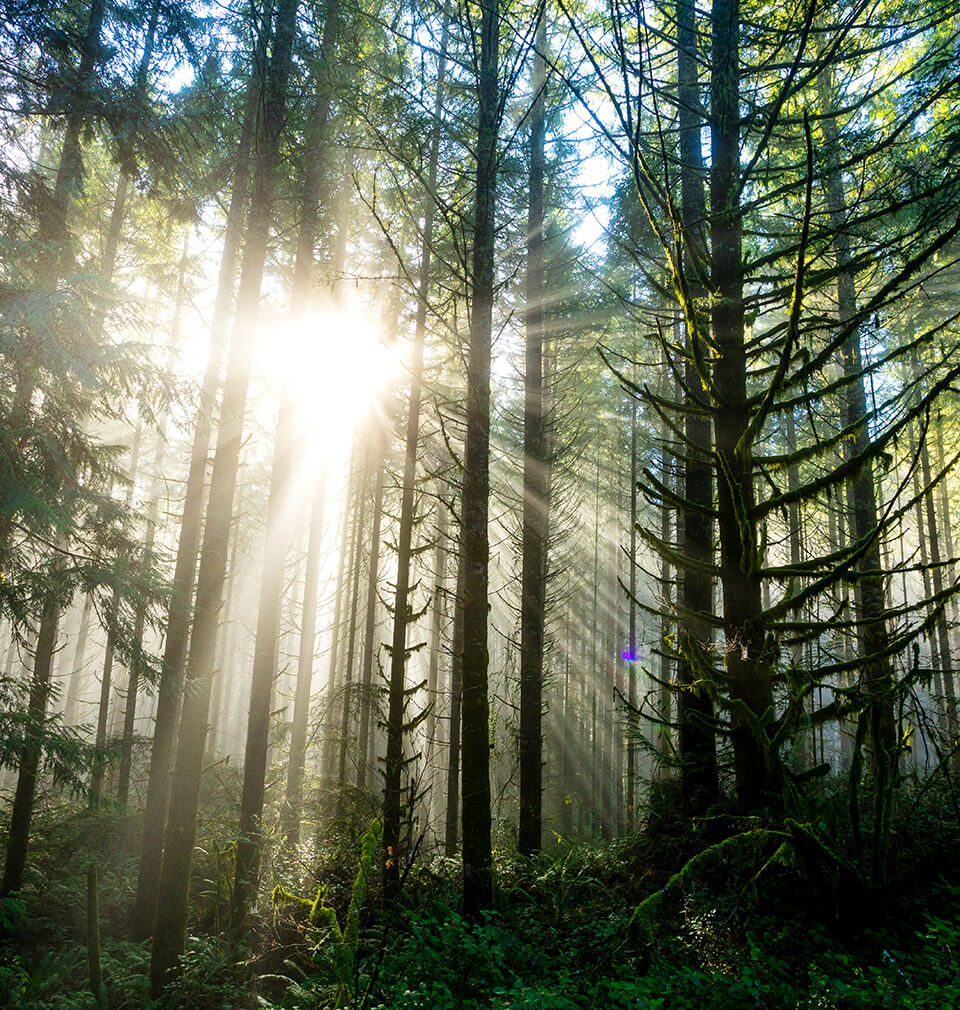 sunlight through a forest